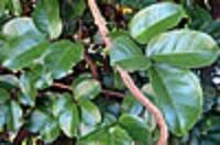 BOP plants tree