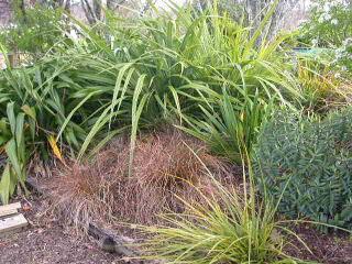 NZ, plants wholesalers
