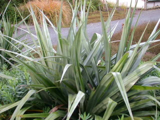 plants wholesalers NZ,