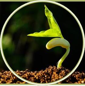 online plant nursery tauranga